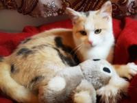 Hi- I'm Audrey! I am a beautiful dilute calico girl and