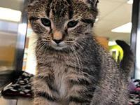 Auggie's story Auggie came to us nearly lifeless in a