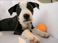 Auggie's story Hi, I'm Auggie! I was rescued from the