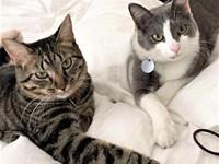 Augustus & Lucinda's story You can fill out an adoption