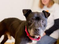 Augustus is a handsome 7-year-old mixed-breed male who