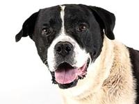 Augustus's story Augustus' adoption includes his: