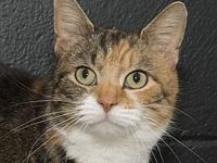 My story Hi my name is Aurora. I am female calico cat