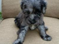 We still have 3 puppies available that are ready to go