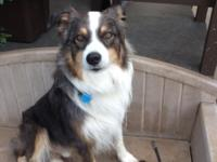 Bear is a three year old male that is very friendly,