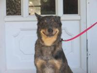 Australian Cattle Dog (Blue Heeler) - Cattle Dog Pups -