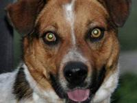 Australian Cattle Dog (Blue Heeler) - Jasmine - Small -