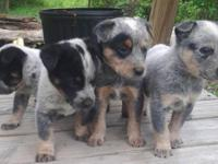 Born April 2nd and April Fifth 2014. We have 2 litters