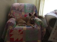 papered Australian cattle dog. Has been spayed. Needs a