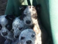 The White's Happy Heelers discover us on facebook under