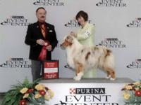 OFFERED ARE OUSTANDING QUALITY RED TRI AND RED MERLE