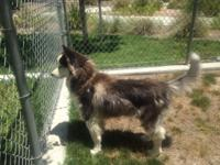 Very sweet loving girl she's 3 years old and is updated