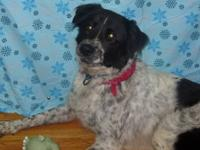 Australian Shepherd - Sally - Large - Adult - Female -