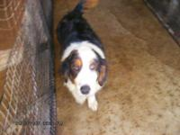 Description This male adult dog needs a large yard to
