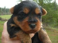 Pets And Animals For Sale In Newport Washington Puppy And Kitten