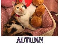 autumn's story You can fill out an adoption application