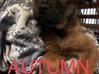 My story Adorable Autumn is in a loving foster home