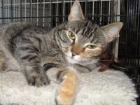 AUTUMN's story Autumn is a pretty tabby/torti mix who