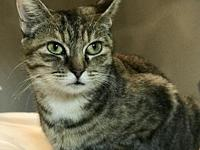 Autumn's story Autumn is a sweet, dainty kitty with