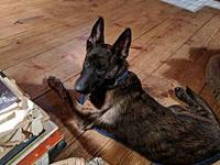 Ava's story Ava is around five months and surrendered