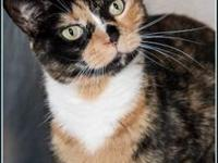AVA's story $97.50 FEE INCLUDES: neutering/spaying,