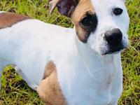 Ava-URGENT's story We do not euthanize any dogs, dogs
