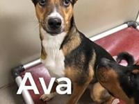 Ava 115041's story This energetic girl is Ava! This