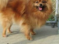 Spice, AKC reg., now available for sale to her forever