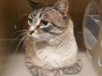Avalanche's story Friendly, affectionate and gentle is