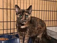 My story Avery is a shorthaired, tortoiseshell female