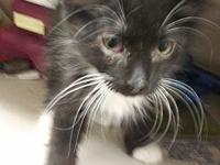 Avery's story Avery is a sweet playful boy looking for