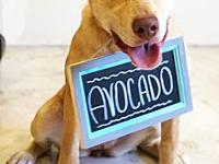 Avocado's story Avocado's bio coming soon! All of our