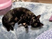 Avril is an adorable torti girl. She loves sitting on