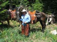 "Awesome 5 year old AQHA Brown/Black Gelding. ""Mr."