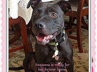 Awesome's story Awesome is a nice dog that loves