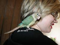 Liz is an exceptional green cheek girl. We hand fed her