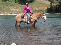 SNICKERS: Beautiful 7yr 14.3hh paint gelding he is