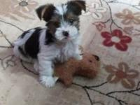 This little guy is awesome he is such a good puppy very