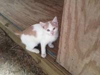 Meow, I'm Tuffy. I am ready for my furever home. My