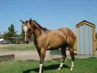 Awesome Registered yearling stallion, colored double