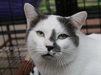 Axel's story Axel is a big friendly young cat. He was