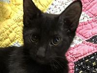 Axel *FOSTER NEEDED*'s story Meet Axel, a 4 month old,