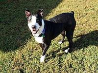 My story Axel is a 3 year old male Bull Terrier mix.