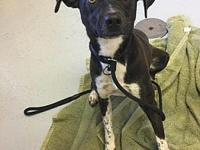 Aysha's story HW+ Aysha is a Pointer mix who weighs