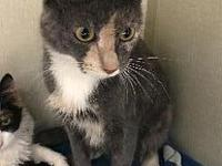 Azalea's story friendly, easy going, nervous, litter