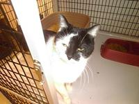 Azlen's story Azlen was brought in as a stray on