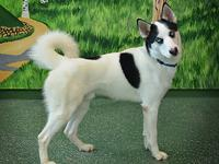 Azule is a 1 year old husky mix that needs an