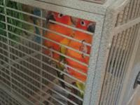 I have eclectus,cockatoos ,sun conures , Hanns mcaws ,