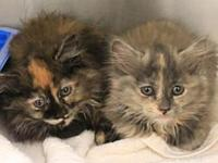 Babies's story These 4 kittens were found outside by a
