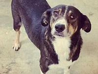 Babish's story Babish is a 9-year-old hound mix who
